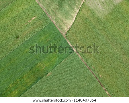 Aerial Photograpy. View green landscape of sugarcane in Thailand. #1140407354