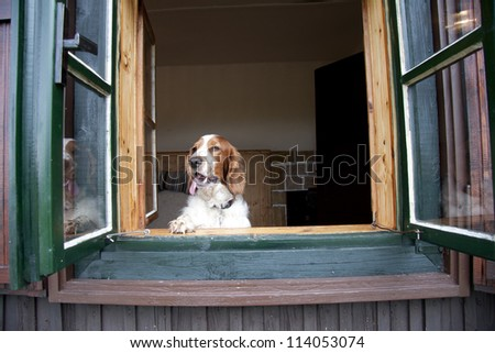 Dog watching out of old window #114053074