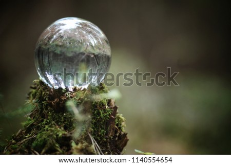 Crystal ball. Magical accessory in the woods on the stump. Ritual ball of witches and sorcerers on an old rotten stump covered with moss.