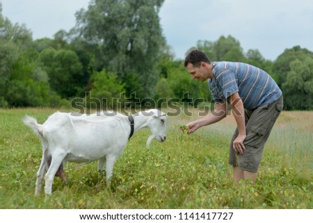 A man feeds a white goat that grazes on a green meadow #1141417727