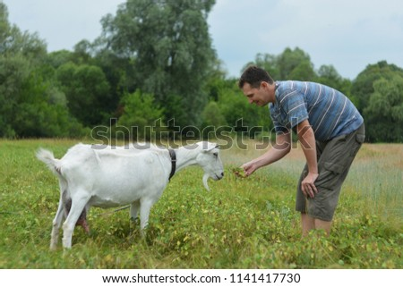 A man feeds a white goat that grazes on a green meadow #1141417730