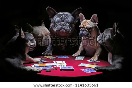 French bulldogs playing cards Royalty-Free Stock Photo #1141633661