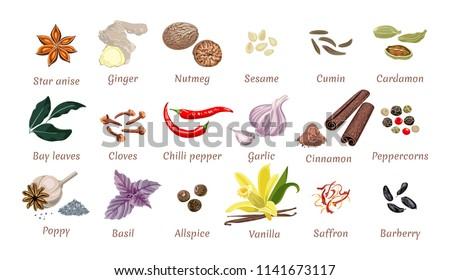 Set of vector spices isolated. Ginger, Nutmeg, Sesame, cumin, Cardamom, carnation, Chili, Garlic, Bay leaf, Peppercorns, Allspice, Basil, Saffron, Barberry, Star anise, cloves, cinnamon,  vanilla. Royalty-Free Stock Photo #1141673117
