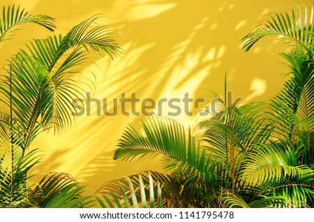 Bright yellow painted wall framed with green tropical palm leaves, sunlight with shadows patterns, summer background.  #1141795478