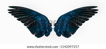 blue wings on white background Royalty-Free Stock Photo #1142097257