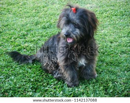 Very Pretty Puppy #1142137088