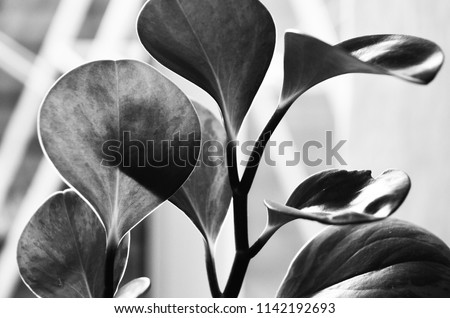 Black and white plant photography