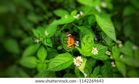 butterfly orange hd #1142269643