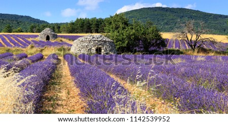 Old borie and lavender field in Provence, south of France #1142539952