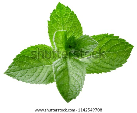mint leaves isolated on white Clipping Path #1142549708