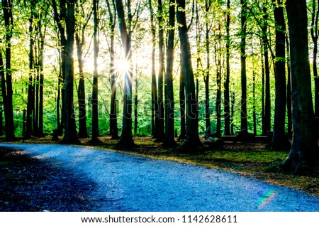 Forest,Greenary, Trees, VIEW OF TREES IN FOREST #1142628611
