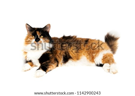 Black white red cat on a white background #1142900243