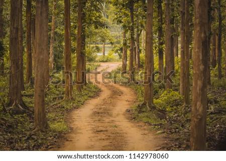 Unexplored path / Road less taken at Nagarhole national park, Karnataka, India. Bandipur forest. Curvy road ahead. Jungle safari searing wild animals. Tall trees, glomy weather, mysterious nature #1142978060