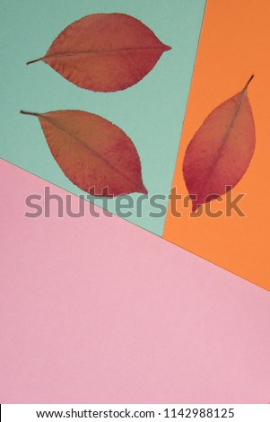 Autumnal colorful background with place for text #1142988125