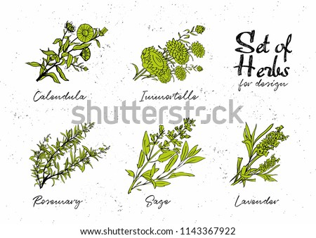 Hand drawn herbs set for medicinal, for cooking, cosmetics, store, health care, tag label, food design. Botanical illustrations for tags. Vector sketches.  #1143367922