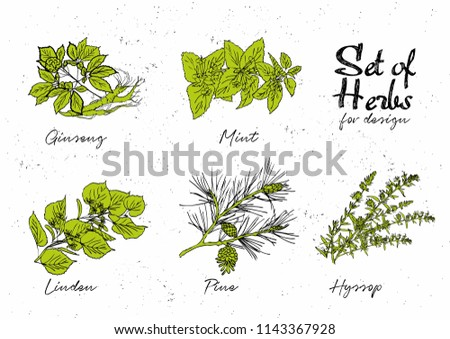 Hand drawn herbs set for medicinal, for cooking, cosmetics, store, health care, tag label, food design. Botanical illustrations for tags. Vector sketches.  #1143367928