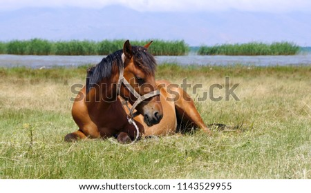 Beautiful horse on the shore of lake Sevan #1143529955
