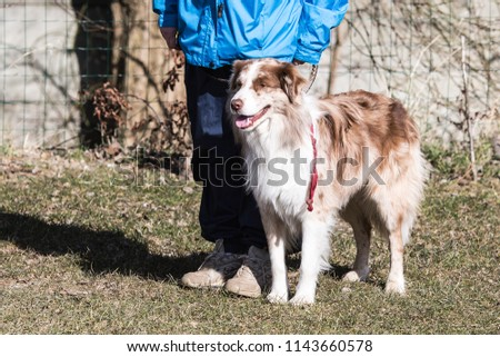 Portrait of a border collie dog living in belgium #1143660578