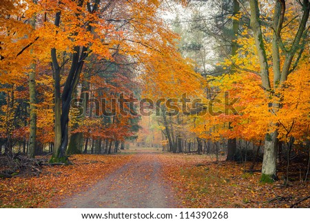Pathway in the foggy autumn park