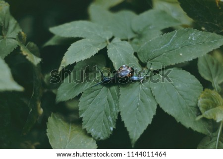 closeup image of snail in the garden on green leaf #1144011464