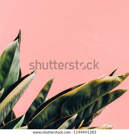 Minimal plants on pink fashion concept. Tropical green on pink wall #1144441283