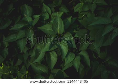 Green leaves of tree in a park,summer time #1144448405