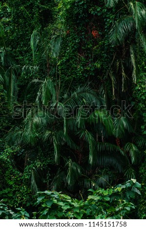 Palm trees in the forest. Located in the park of Sukhothai. #1145151758