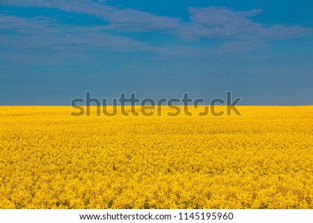 Panorama of Ukraine to the Independence day of Ukraine, open field and blue sky Royalty-Free Stock Photo #1145195960