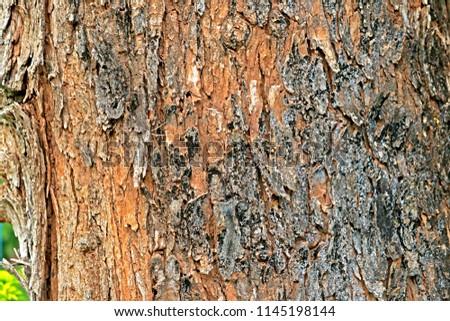 Bark tree texture #1145198144