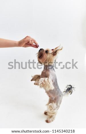woman feeding a dog                             #1145340218