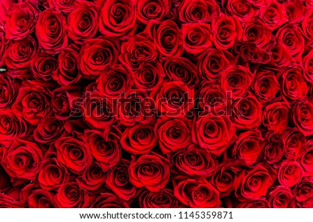 fresh dark red roses close up texture background