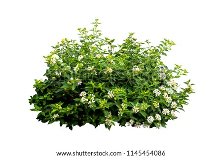 flower plant bush tree isolated with on white background clipping path Royalty-Free Stock Photo #1145454086