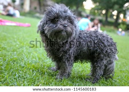 wet puppy dog in the green garden  #1145600183
