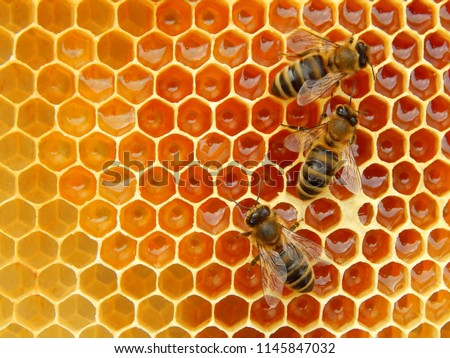 bee on honeycombs with honey slices nectar into cells. Royalty-Free Stock Photo #1145847032