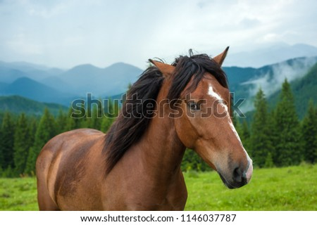 Grazing horse at high-land pasture at Carpathian Mountains after rain. Picture of beautiful green pasture on a background of mountains.