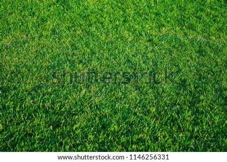 Lawn with green grass closeup. Natural background texture #1146256331