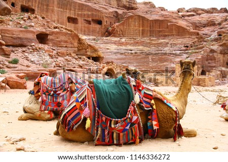 Camels in front of the Theater of Ancient City of Petra, Jordan.  #1146336272