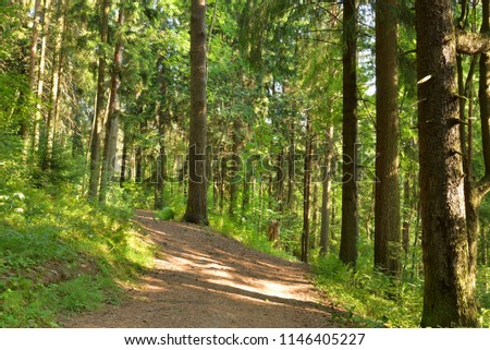 Pine forest at summer day in the Karelian Isthmus, Russia. #1146405227