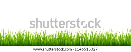 Green grass meadow border vector pattern. Spring or summer plant field lawn. Grass background. Royalty-Free Stock Photo #1146515327