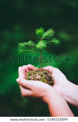 Female hand holding sprout wilde pine tree in nature green forest. Earth Day save environment concept. Growing seedling forester planting Royalty-Free Stock Photo #1146525899