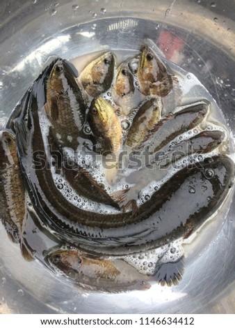 Many types fresh fish #1146634412