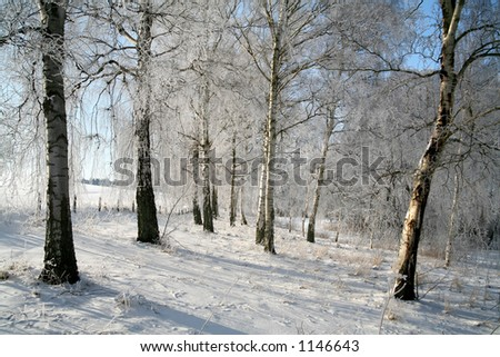 in the morning  sun in  winter in denmark, a field with trees #1146643