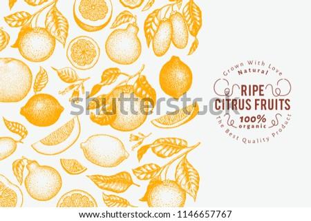 Citrus fruits banner template. Hand drawn vector fruit illustration. Engraved style. Vintage citrus background. #1146657767