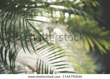 Copy space of blur green palm leaf tree with bokeh sun ligth abstract texture background. Ecology and environment concept. Vintage tone filter effect color style.