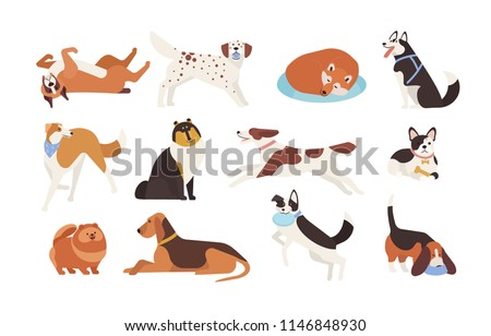 Collection of funny dogs of various breeds playing, sleeping, lying, sitting. Set of cute and amusing cartoon pet animals isolated on white background. Colorful illustration in flat style