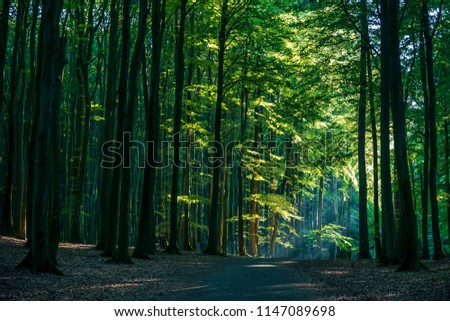 Scenic view of the path through heart of the beech forest at Jasmund National Park. #1147089698