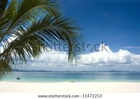 coconut and blue beach #11472253