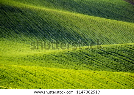 Rolling hills of green wheat fields. Amazing fairy minimalistic landscape with waves hills, rolling hills. Abstract nature background. South Moravia, Czech Republic #1147382519