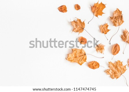Autumn composition. Frame made of autumn dried leaves on white background. Flat lay, top view, copy space #1147474745