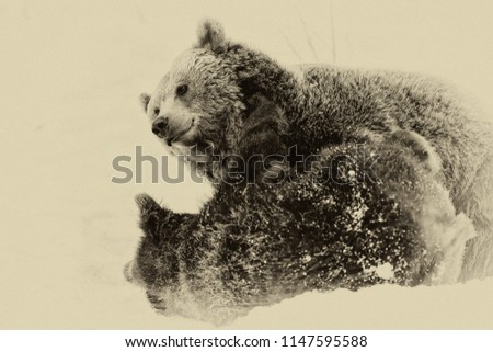 Brown Bears (Ursus arctos) in Lake Clark National Park, Alaska, USA #1147595588